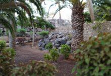 Palm on Fuerteventura