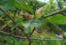 Snail on the leaf